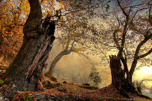 Chestnut Tree Forest, Missano, Italy