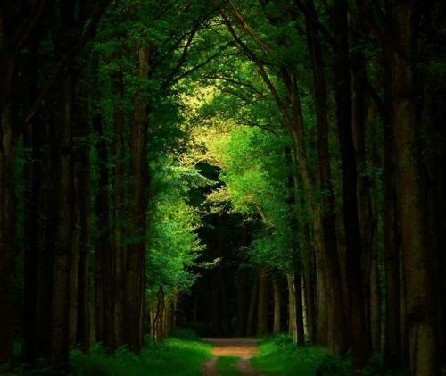 Dark Forest, The Netherlands