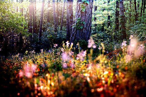 Enchanted Forest, Tulsa, Oklahoma