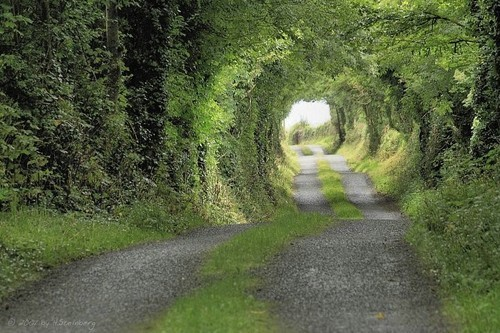 Tree Tunnel, Clare County, Ireland