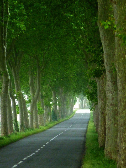 Tree Tunnel, Burgundy, France