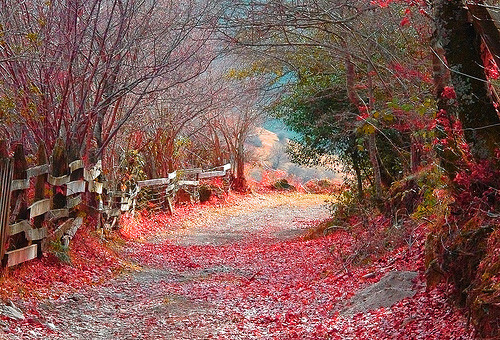 Autumn Road, Cantabria, Spain