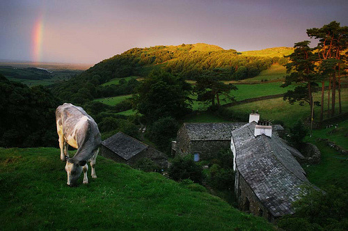 Pastoral Sunrise, Lake District, England