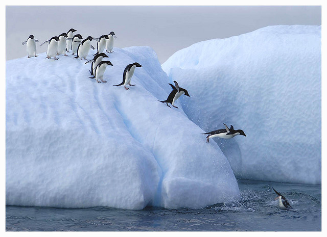 by Photographers Eye on Flickr.Penguins queue to get into the water on this ice flow, Antarctica.