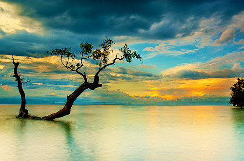 Sunset Tree, The Philippines