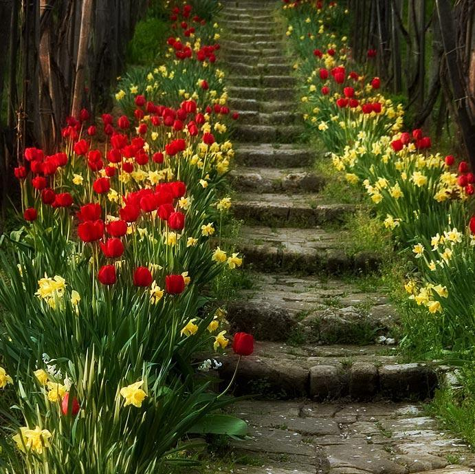 Spring Blossom Stairs, Portugal