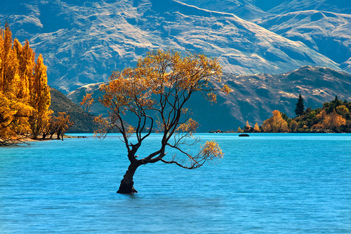 Solitude,  Lake Wanaka, New Zealand