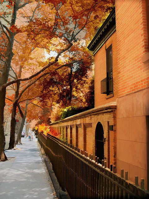 Autumn, New York City