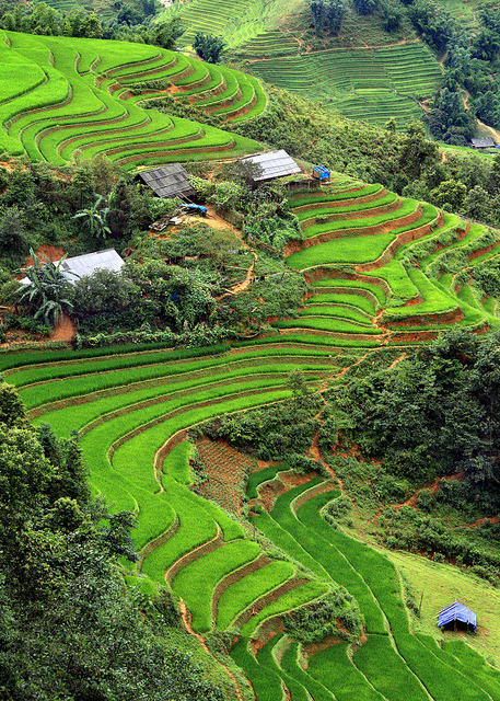 Rice terraced fields near Sapa, Vietnam