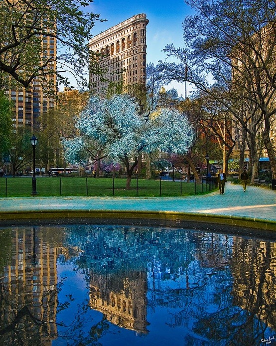 Reflection, Madison Square Park, New York City