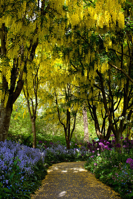 The golden path at VanDusen Botanical Garden in Vancouver, Canada