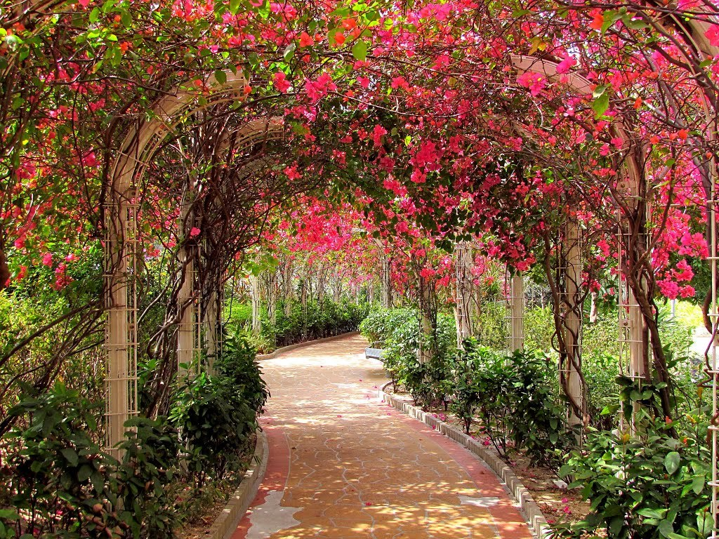 Bougainvillea alley at the Un Chau Estate / Hong Kong