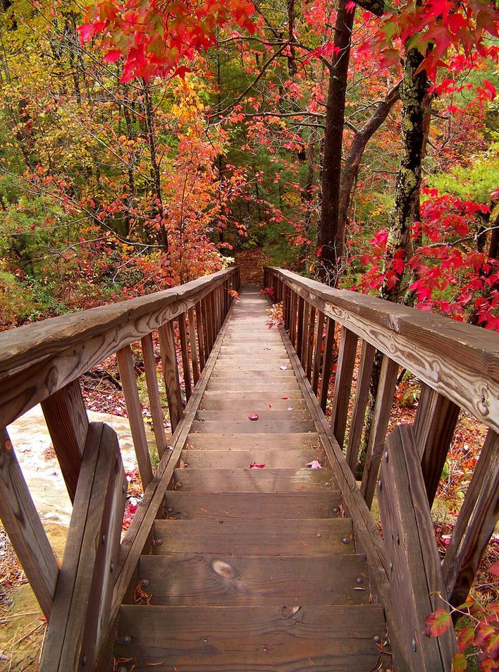 The way to Silvermine Arch, Daniel Boone National Forest / Kentucky